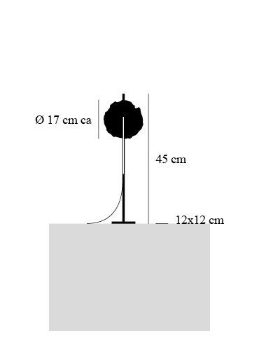 dimensions ametista