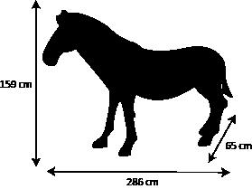 dimensions zebre design artypopart